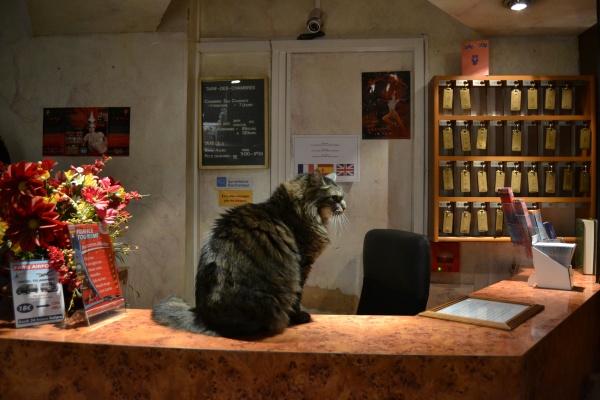Cat At A Parisian Hostel